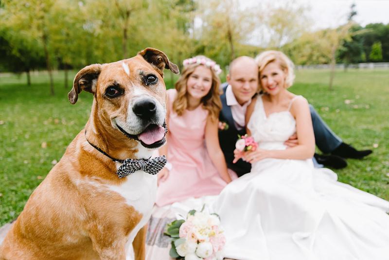 идеи для свадебной фотосессии летом - домашние животные, собаки