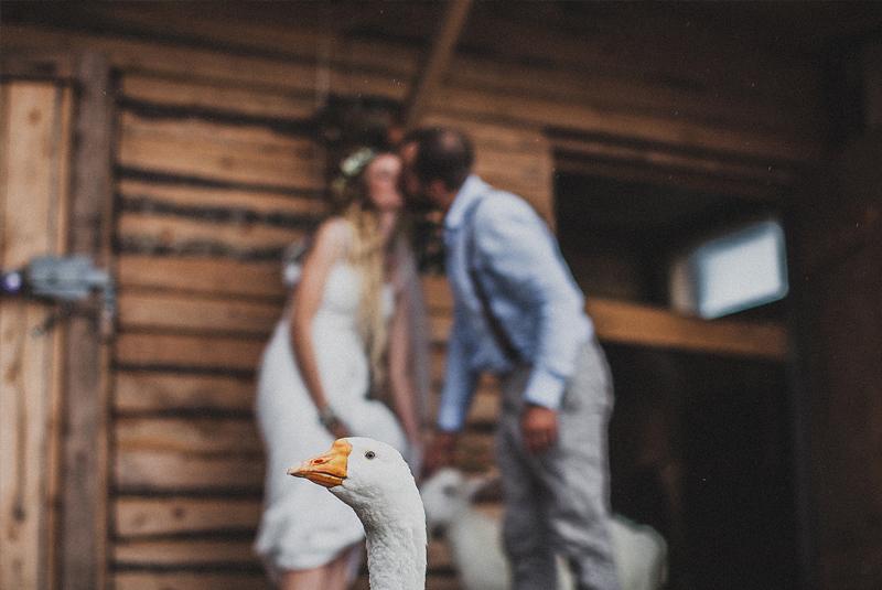свадебное фото : гусь