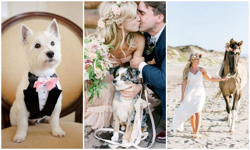 свадебные аксессуары спб, аксессуары для свадьбы, животные на свадьбу спб