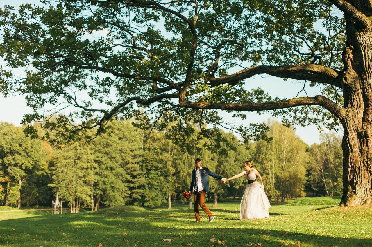 петергоф, свадьба, александрия , фото