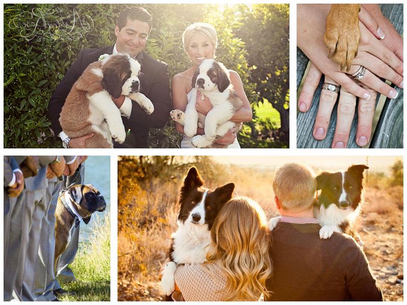 Свадебная фотосессия с животными